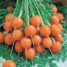 Carrot.Parisienne
